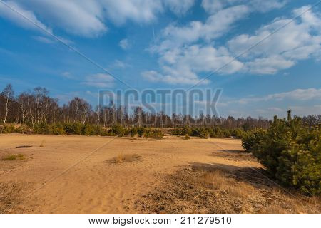 Heather And Sand On The Veluwe