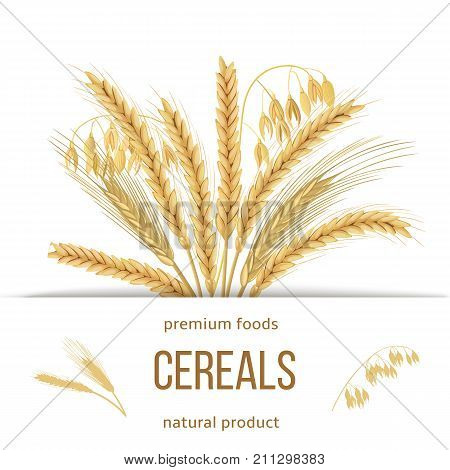 Wheat, barley, oat and rye set. Four cereals grains with ears, sheaf and text premium foods, natural product. 3d icon vector. Horizontal label. For design, cooking, bakery, tags, labels, textile