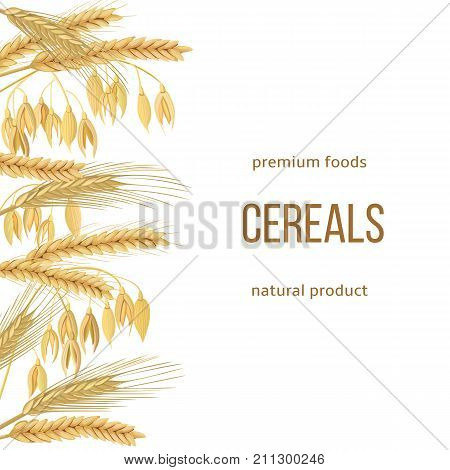 Wheat, barley, oat and rye set. text premium foods, natural product. Four cereals grains with ears, sheaf. 3d vector. Vertical label. Free space. For design, cooking, bakery, tags, labels, textile