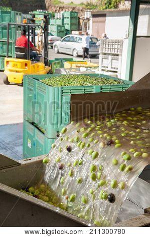 Olive Washing Phase