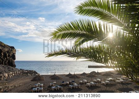 view on beach. palm tree leaves against sunset sun light and blue sky with clouds. outdoor shot on Tenerife.