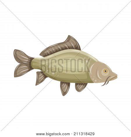 Common Carp isolated on white background. Fresh raw fish - vector illustration. Design element for emblem, logo, label, sign, brand mark.