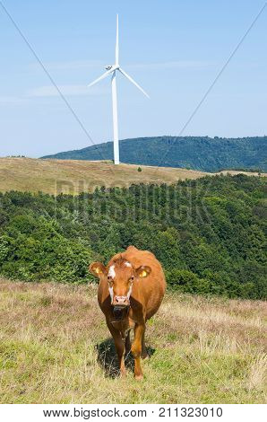 Livestock farming in the mountains. Ecological breeding of animals. Wind turbine, alternative energy. poster