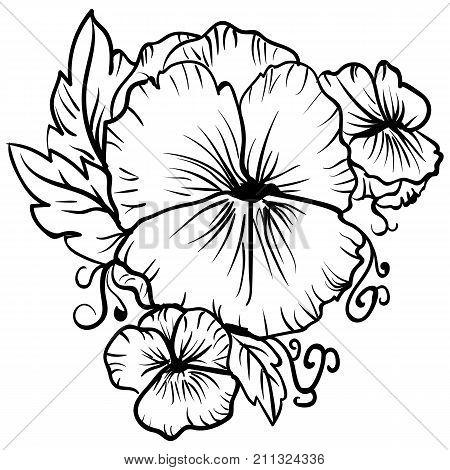 Elegant decorative pansy flowers design element. Floral branch decoration Tattoo sketch pansies