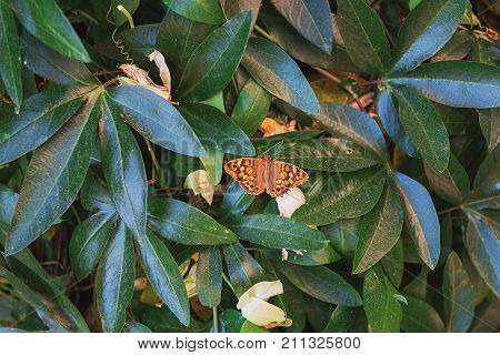 Butterfly cherish the sun on the leaves of a shrub