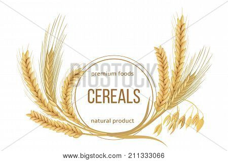 Wheat, barley, oat and rye set. Four cereals spikelets with ears, sheaf and text premium foods, natural product. 3d icon vector. Round label. For design, cooking, bakery, tags, labels, textile