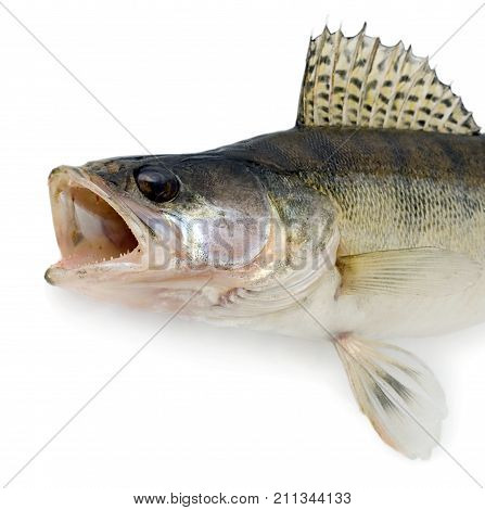 Ravenous Monster Fish Isolated
