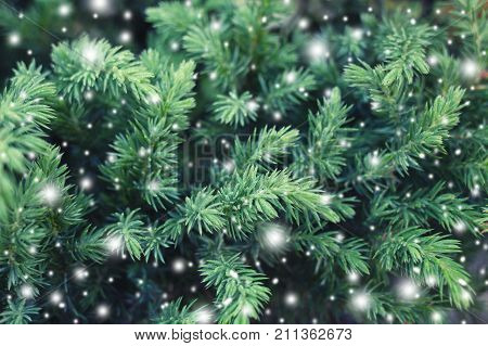Natural spruce with snowy texture. Fairy Winter Holiday background. Merry Christmas and Happy New Year greeting card.