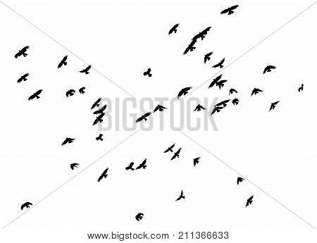 Flock of birds on white background isolated