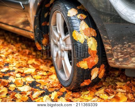 Yellow autumn leaves on tire of car