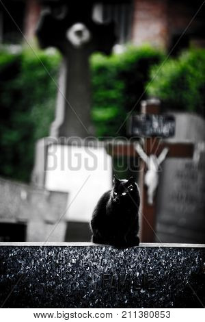 Scary black cat on a cemetery sitting on the tomb stone of a grave with crosses and tombs in the background