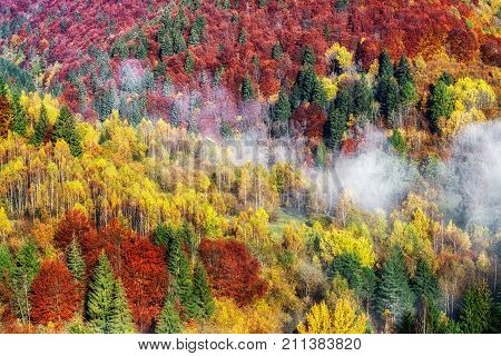 Colorful autumn forest and haze in Slovakia