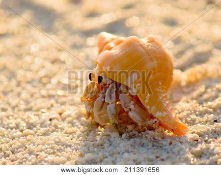 Funny Crab Beach Walker