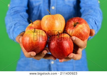 Male Hands Hold Red Apple Fruits Isolated On Green Background