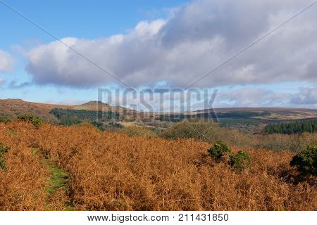 Autumn arrives in Dartmoor in Devon UK