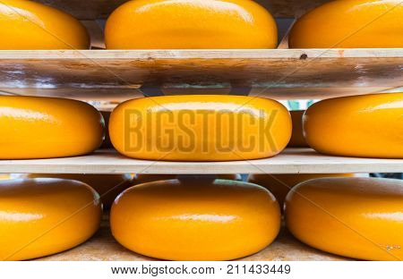Large yellow rounds of gouda cheese closeup on shelves ready for market in city known for manufacture and market of gouda Alkmaar
