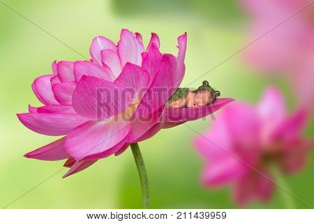 Adorable newborn baby in frog outfit sleeping in a pink lotus flower