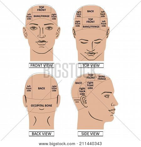 Man head divisions scheme template (front back top side views) vector illustration isolated on white background