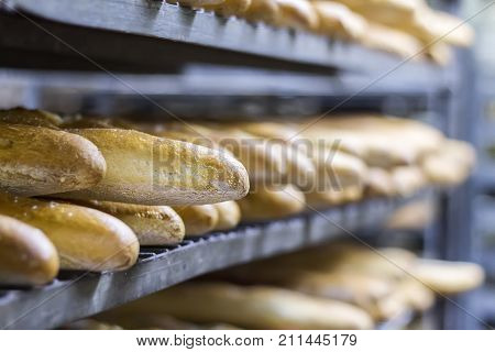 Many Ready-made Fresh Bread In A Bakery Oven In A Bakery. Bread Making Business. Soft Focus