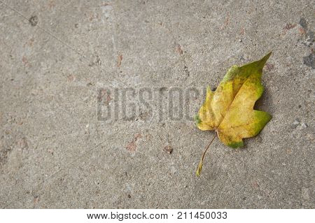 Autumn background. A leaf in yellow and green colors on the cement background.