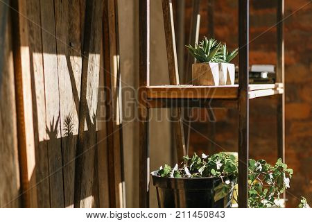 Old wall with iron rusty rack and shelves full of succulents, flowers, books and decor objects. Indoor horizontal shot in sun beams