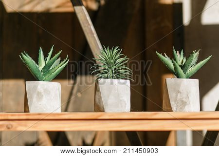 Three succulents in pots standing on wooden shelf under the sun beams with wooden door on background.