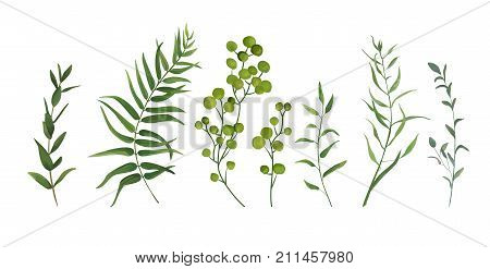Vector designer elements set collection of green forest fern tropical palm green berry greenery art foliage natural leaves herbs in watercolor style. Decorative beauty elegant illustration for design