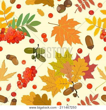 Vector pattern with multi-colored leaves of oak, maple, ash, rowan and ripe acorns and berries of mountain ash. Nuts and berries.
