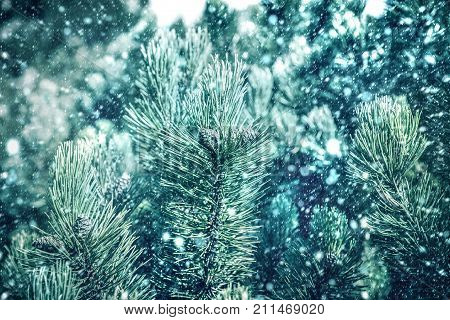 Green Branches Of Pine Tree On Snowfall