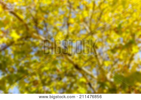 Abstract Blurred Fall Background of Orange Red Yellow and Green Leaves