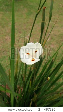 White flower among the green leaves in the garden
