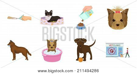 Pet icons in set collection for design. Care and education vector symbol stock  illustration.