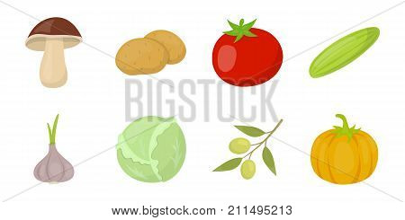 Different kinds of vegetables icons in set collection for design. Vegetables and vitamins vector symbol stock  illustration.