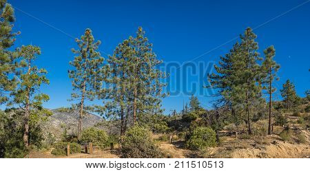 Mountain Forest Edge Panorama