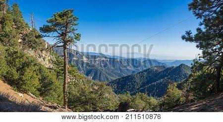 Tall Cliffside Pine Tree