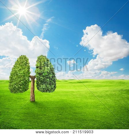 Green tree shaped in human lungs. Conceptual image