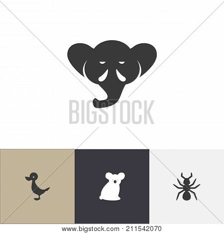Set Of 4 Editable Zoology Icons. Includes Symbols Such As Bedbug, Proboscis, Quack And More