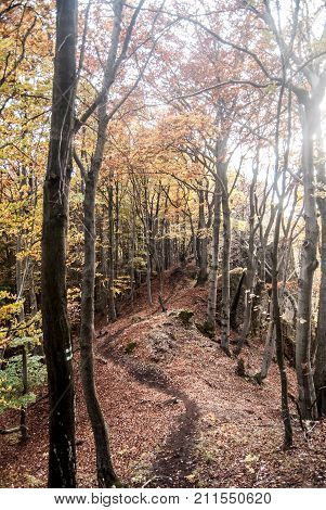 autumn mountain forest with colorful trees hiking trail small rocks and fallen leaves near Kecka hill in Sulovske vrchy mountains in Slovakia