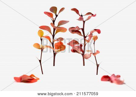 Live and inanimate plant isolated on white background isolate