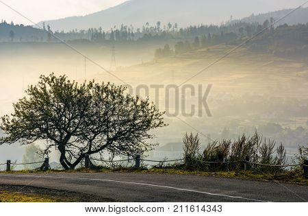 Tree On Hillside Over The Rural Valley