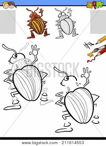 Drawing And Coloring Activity With Potato Beetle