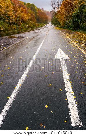 Wet Asphalt Road Through Forest In Deep Autumn