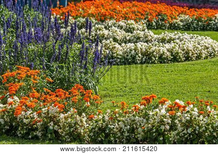Beautiful lawn with various flowers and lawn on a Sunny day. The horizontal frame.