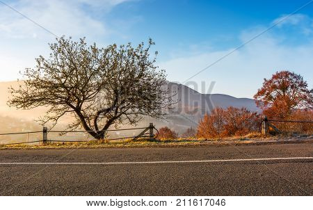 Interesting Tree By The Road At Foggy Sunrise