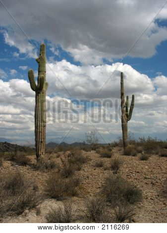 Two Saguaro Cacti In A Desert Landscape