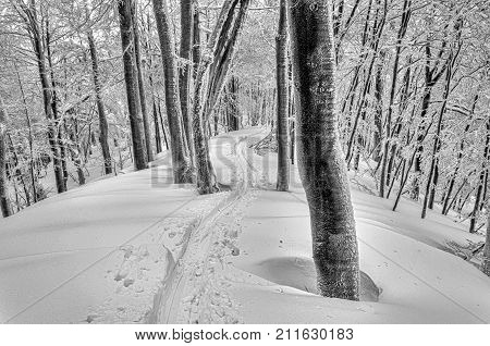 Ski track in mysterious snowy forest in deep snow