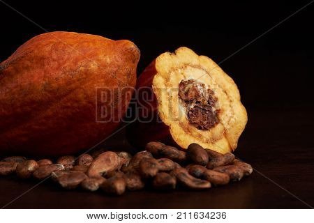 Close-up of cacao fruit. Agriculture cocoa pod theme
