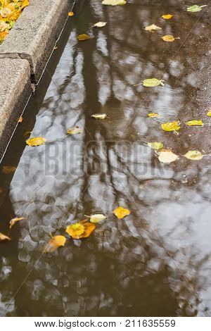 City sidewalk with puddle with trees, sky reflections. Yellow leaves falling in puddle. Sunny golden autumn weather. Seasons