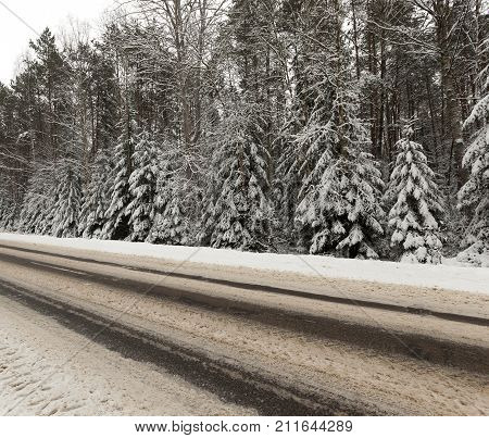 road in the snow after snowfall and trees growing in the snow near the roadway in the snow, close-up photo at an angle