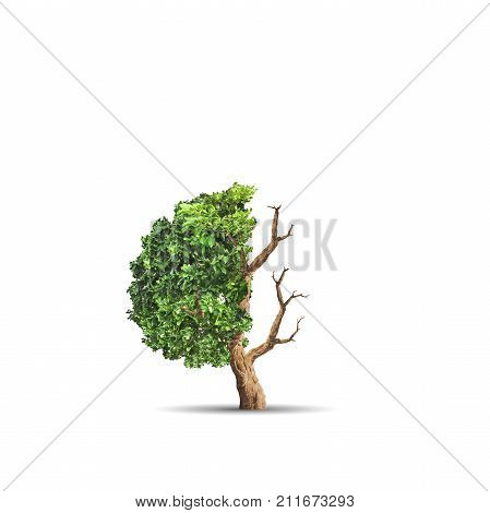 3d illustration of The concept image of ecology. Half alive and half dead tree. Environment concept